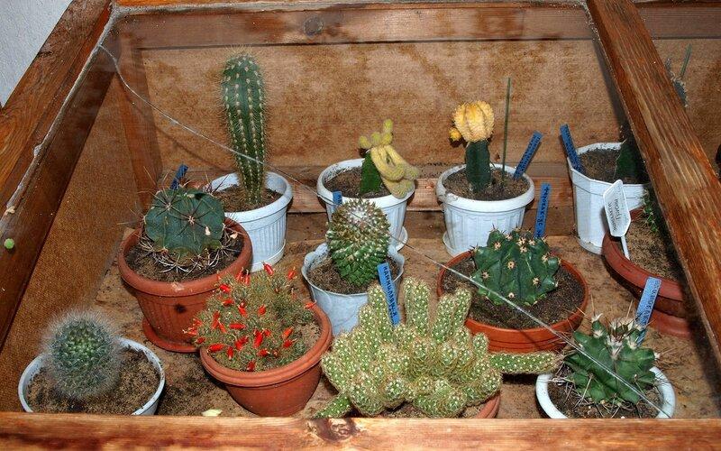 кактусовая галерея