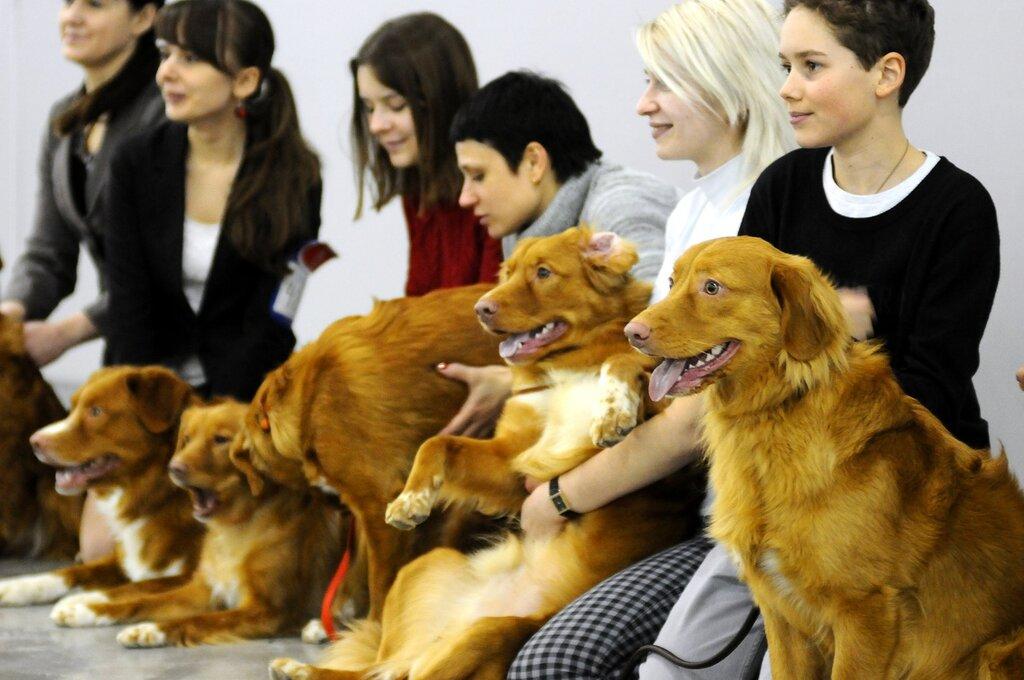 Международная выставка собак «Евразия 2013»