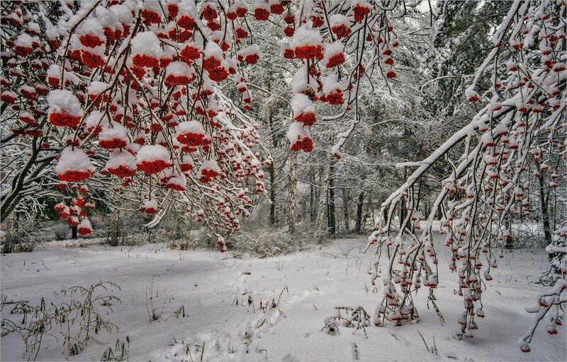 Украшения зимы