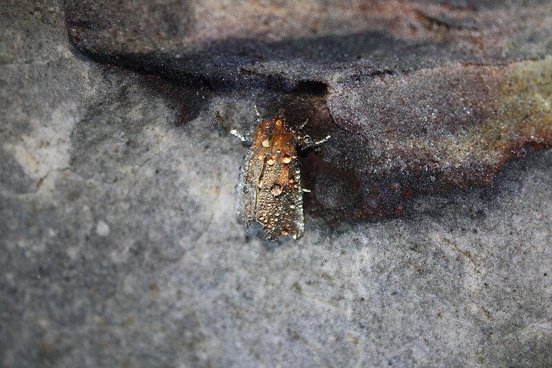 Как зимуют комары картинки