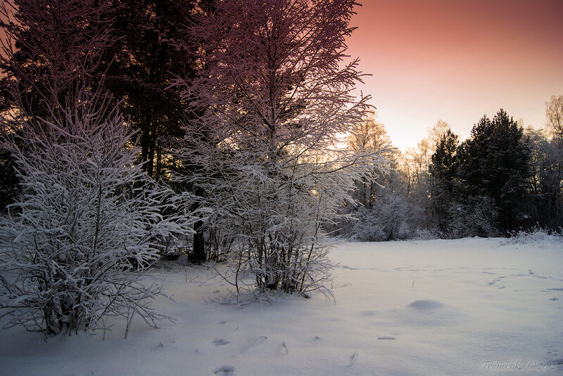 Подчас в снегах зимы пленительны рассветы и закаты