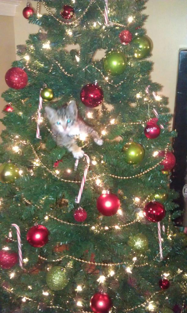 Коты на ёлке - фото 30