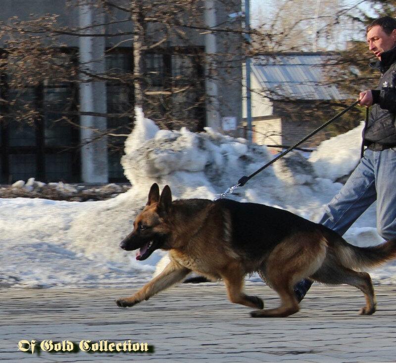 http://img-fotki.yandex.ru/get/6444/134559744.e/0_9859a_800cfe23_XL.jpg.jpg