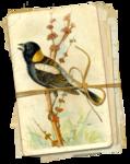 nb_vp_birdstack1.png