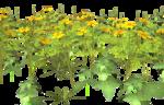 Lug_Grass_Flower (6).png