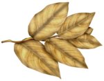 SkyScraps-Adore-Leaves3.png