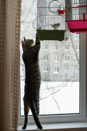 Птица, что на завтрак будешь?