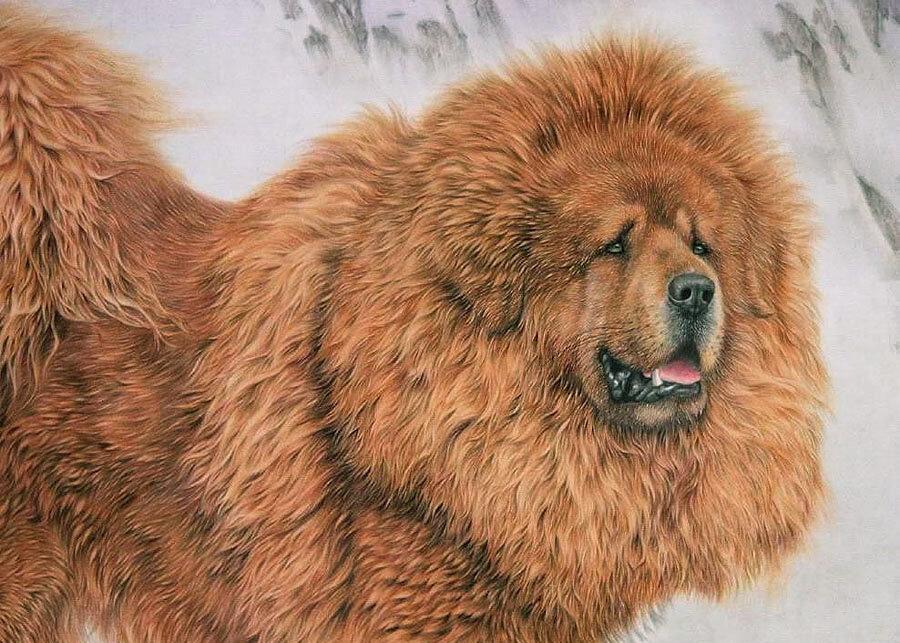 Рисовать тибетского мастифа