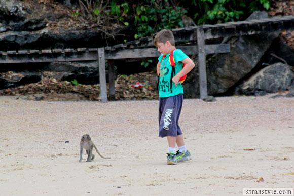 мальчик на тропе обезьян