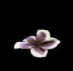 purplebigflower-(BrydkaM).png