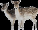 Holliewood_Xmas_Deer1.png