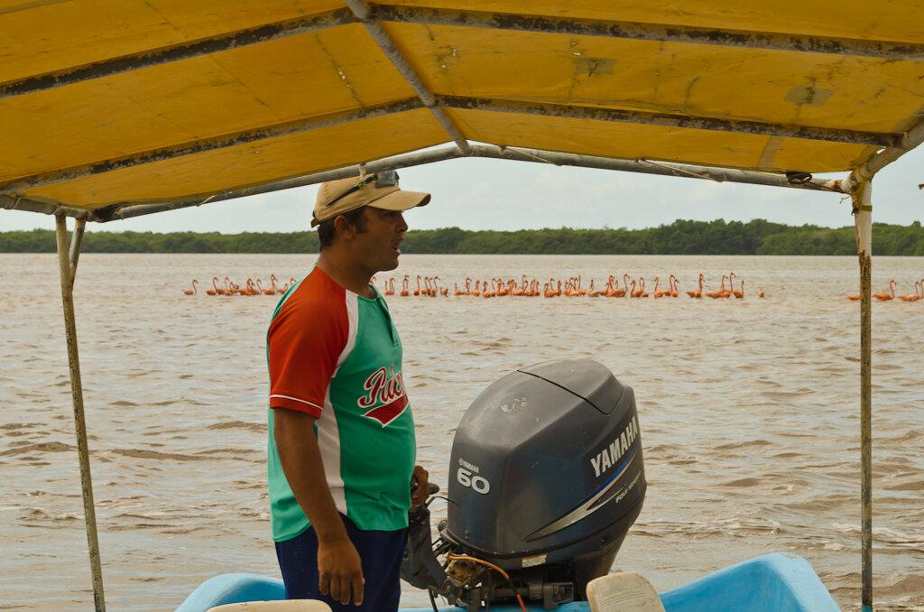 Поселок Селестун. Национальный парк в Мексике. Приплыли полюбоваться табунами фламинго