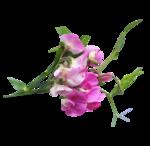 Розовый цветок