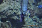 2012-10-27 11-21-36_0154.JPG