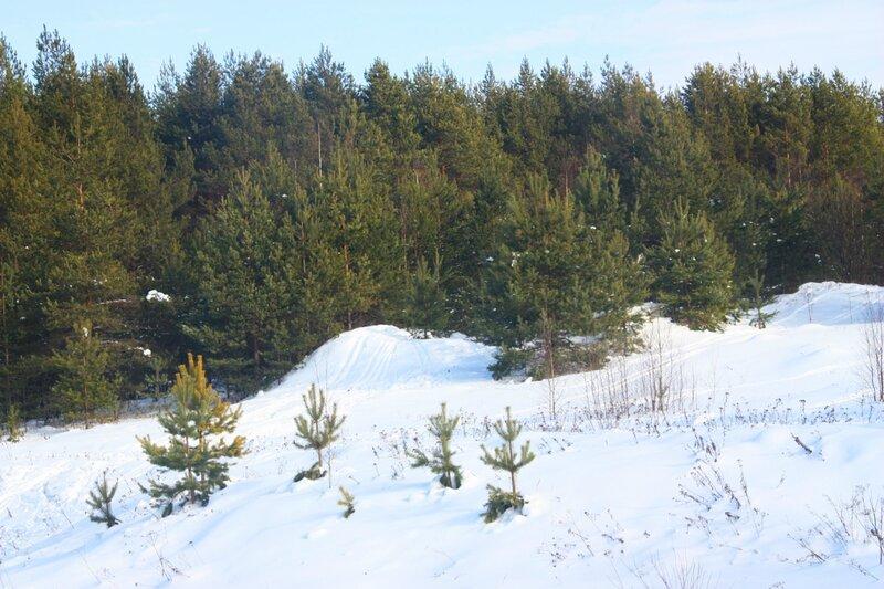 зимний лес, лыжня, снег, лыжи