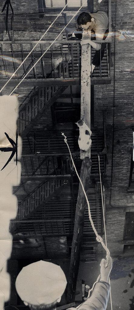 1959-03-18 Bridge Rescue of Stranded Alley Cat.jpg