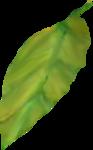 NLD Leaf.png