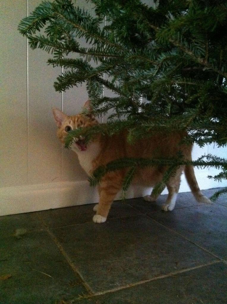 Коты на ёлке - фото 6