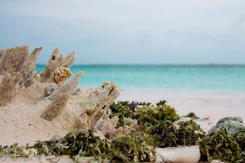 нашки на берегу острова Crasqui