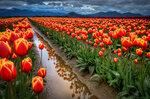 Spring (11).jpg