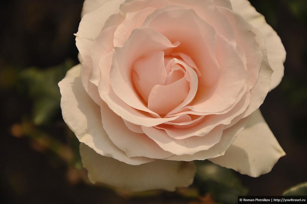 0 1919c0 b21f6d03 orig День 212 213. Прощай, Колумбия! Ботанический сад в Боготе