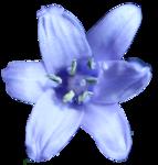 Fleur Bleu par PubliKado.0710.CU (4).png