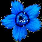 FLEUR NATURELLE par CloDesign - Cu (15) Recolor'e.png