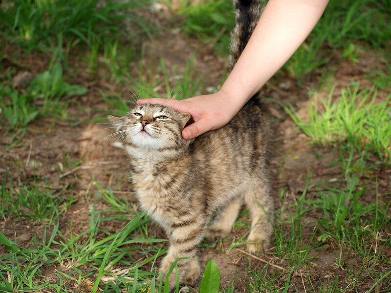 Кошки и котята спасателей P5172973.jpg