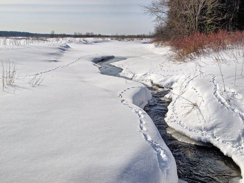 Зимний ручей, кусты и цепочки следов в Заречном
