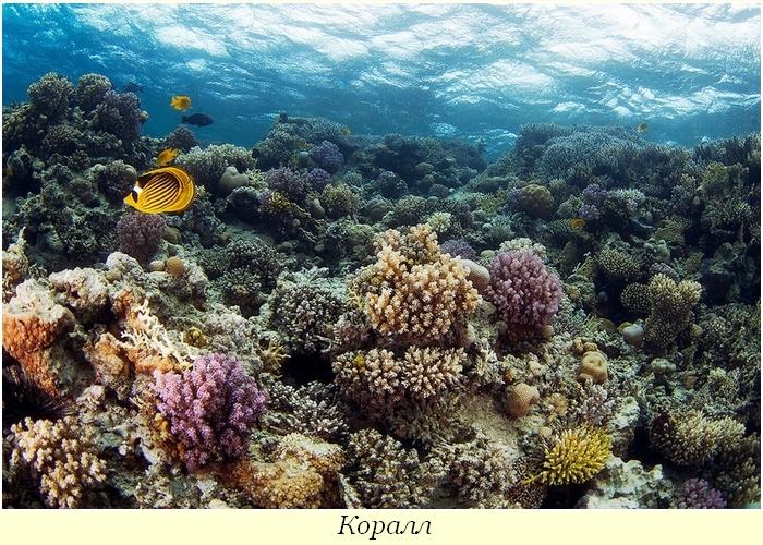 Подводные чудеса