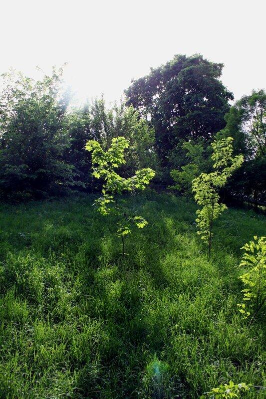 Природа Владимирской горки