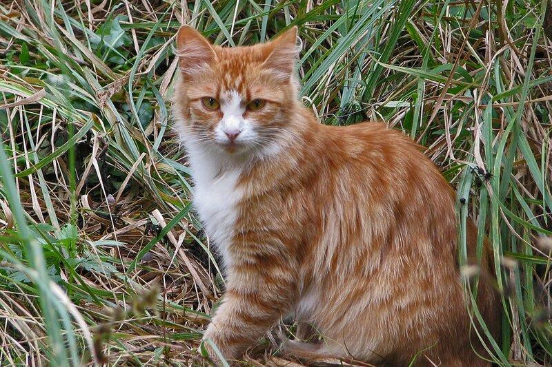Котя цвета осени