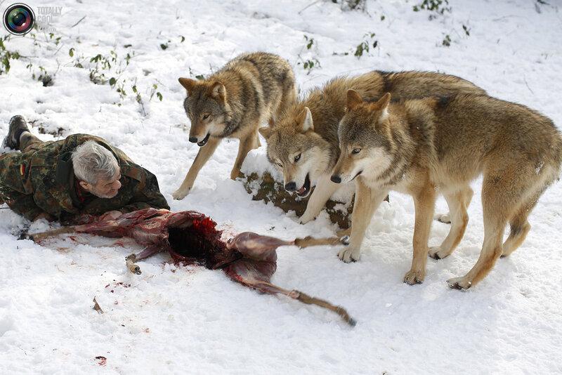 как сбить собаку со следа во время преследования Вакансии Модель всей