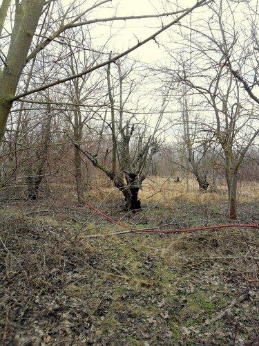 В февральском лесу