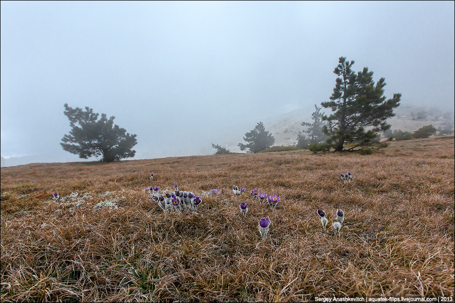 Весенние цветы на склонах Ай-Петри