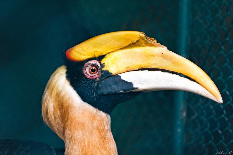 Таиланд, Пхукет, зоопарк