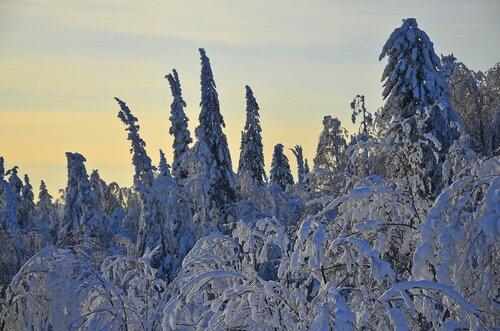 Лес у Белой горы.