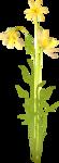 NLD Flower cluster.png