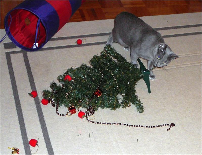 Коты на ёлке - фото 38