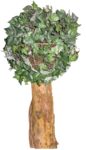 feli_gs_tree.png