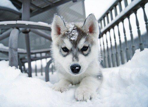 Веселые собаки в снегу