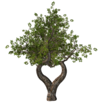 GC_EF_tree_6.png
