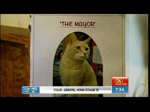 мэром города выбирают кота