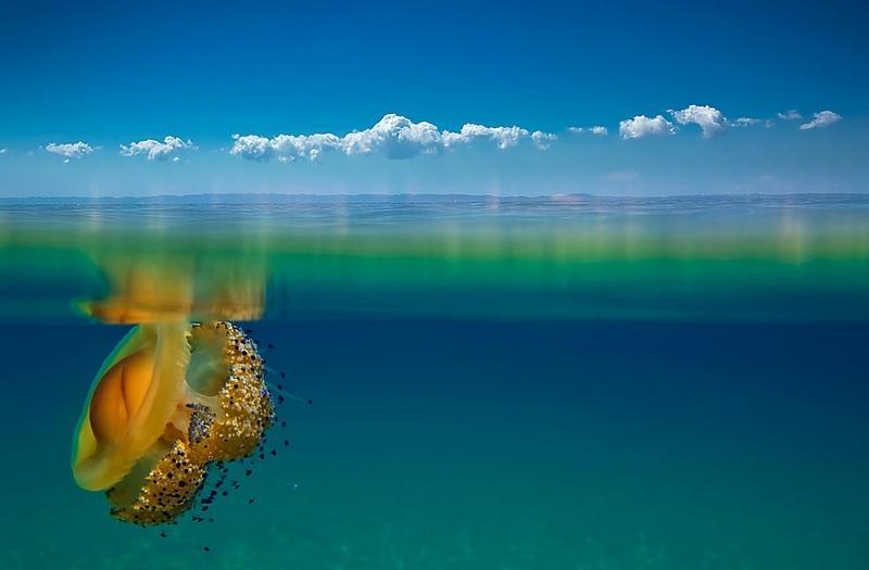 Великолепные, почти космические фотографии… Удивительный мир медуз (30 фото)