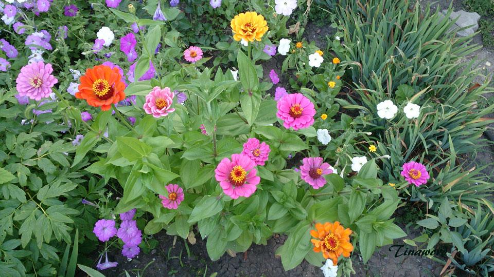 цветы-7.jpg