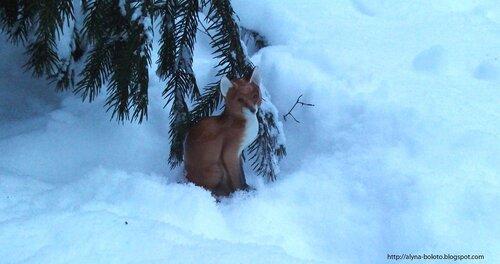 Лис в снегу
