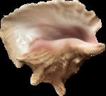 Морские раковины и ракушки