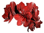feli_btd_red flowers.png