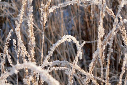 зимняя прогулка травинки