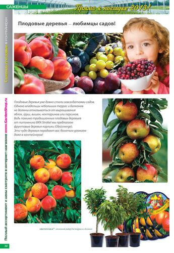РОЗЫ, САЖЕНЦЫ, МНОГОЛЕТНИКИ в контейнерах 2013! Открыт приём заказов. Без предоплаты! www.GardenShop.ru